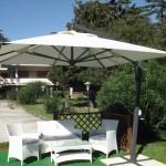parasol-nibbio